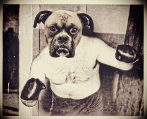 Boxer Boxer