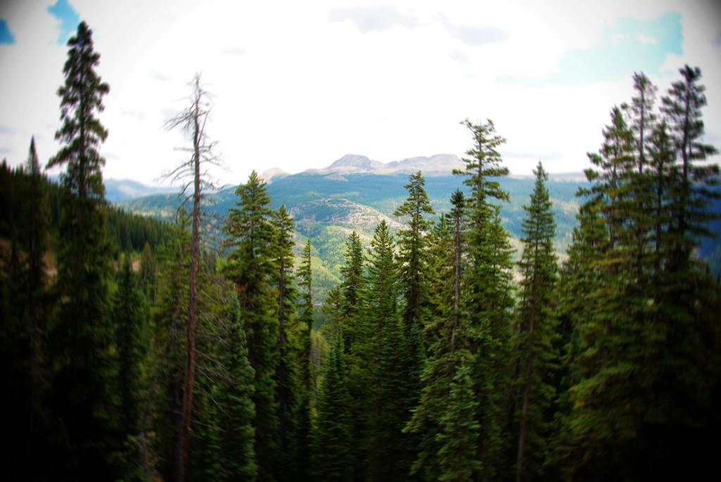 treeline blur