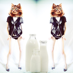 Milk Cat Square_web